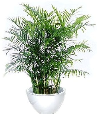 Rent A Plant Large Plants Green World Builders Inc