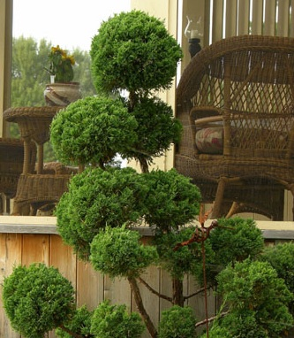Landscape Design Pictures Front Yard Tolle Gartenideen Mit